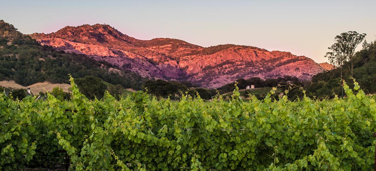 Vineyard to Vintner